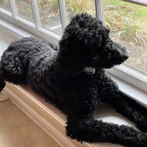 National Adopt A Shelter Pet Day – April 30, 2020