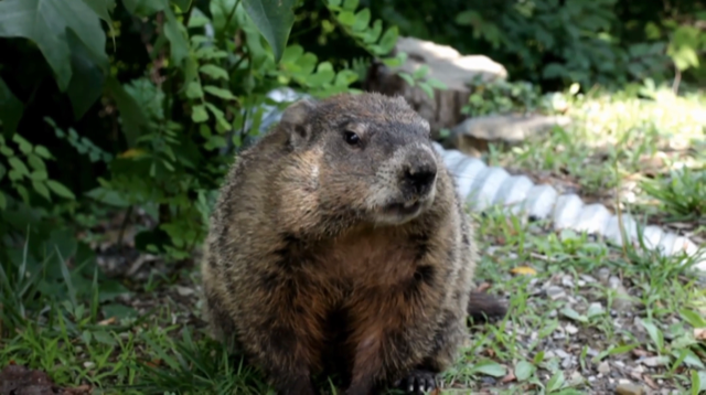Triple-I/Milliman Groundhog Day Report Projects Insurer ...