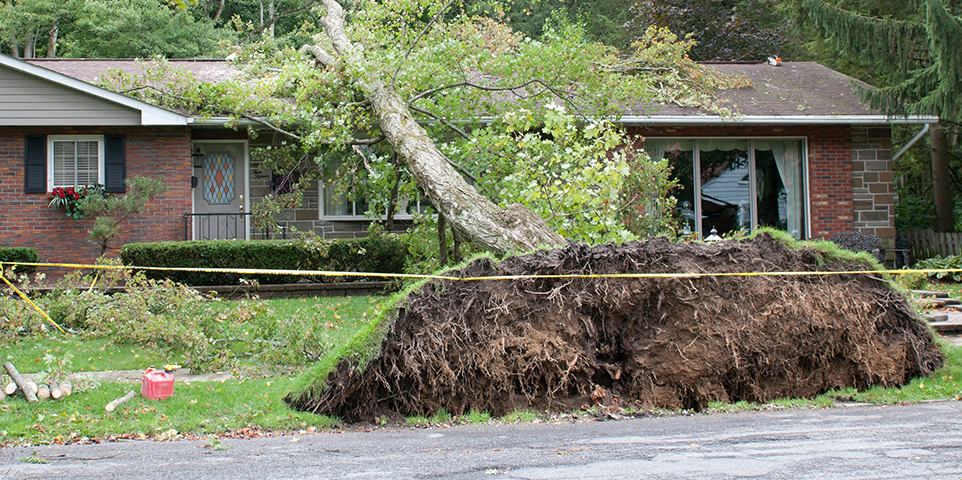 If A Tree Falls On Your House Are You Covered Iii